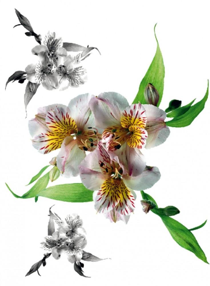 Wandtattoo Blumen Weiß : Wandtattoo Wandsticker Tattoo Wanddeko Weiße Blüte Blumen Blume