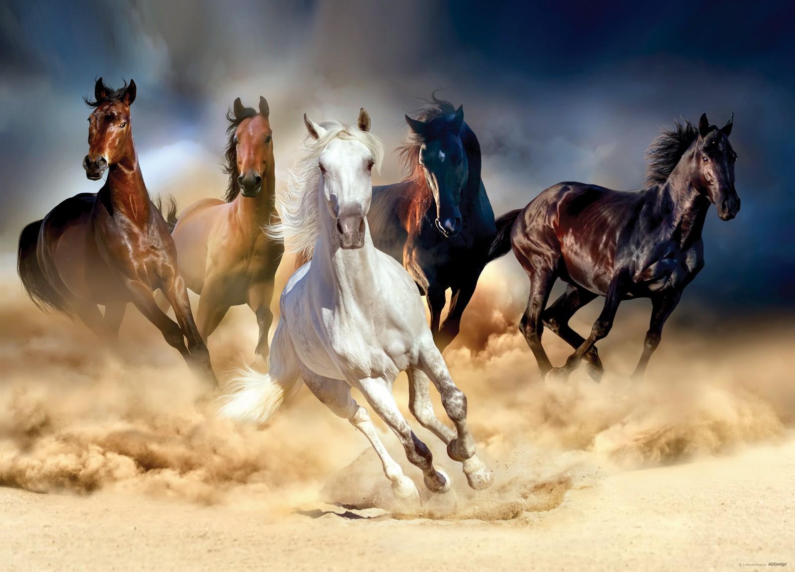 Fototapete Poster Pferde Tiere Mädchen 160x115cm