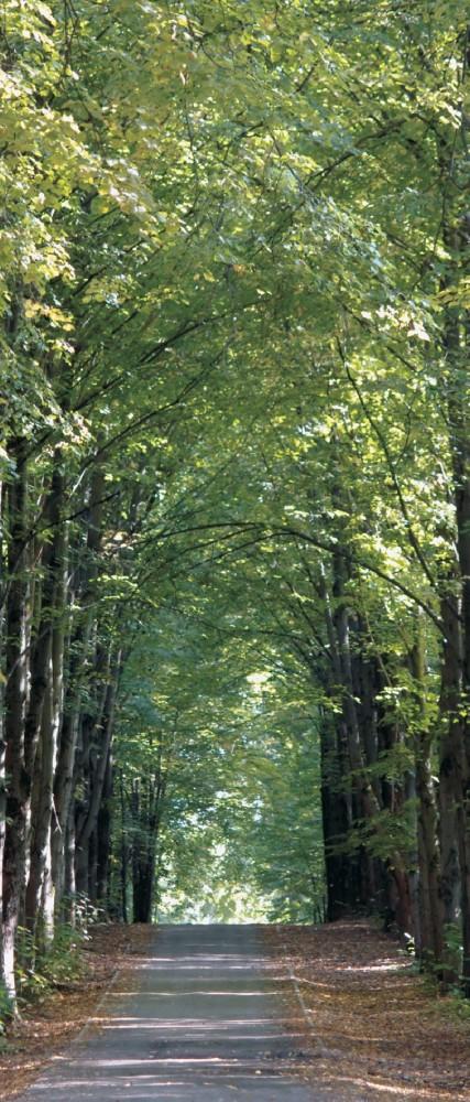 Türtapete Fototapete Tapete Park Parkweg Wald Bäume ...